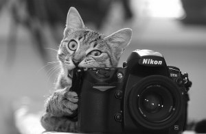 cat-with-camera