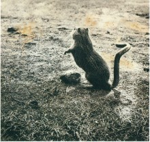 Fauna_-Myodorifera-Colubercauda_1985-1989-1024x964