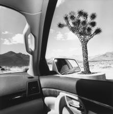 """Lee Friedlander, California, 2008, dalla serie """"America by Car"""" Gelatin silver print, 37.5 × 37.5 cm Courtesy Fraenkel Gallery, San Francisco © Lee Friedlander, courtesy Fraenkel Gallery, San Francisco"""